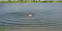 В Каменске-Уральском определили самые опасные места для купания