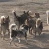 В Каменске-Уральском разработан проект новой биотермической ямы для захоронения бездомных животных