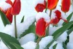 Каменская погода подарит женщинам 8 марта снег и 8 градусов мороза