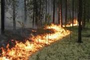 В Каменске-Уральском опять объявлен пятый класс природной пожарной опасности