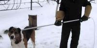 Отловом бездомных собак в Каменске-Уральском займутся челябинцы