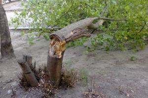 Сильный ветер отметился в Каменске-Уральском сломанными деревьями