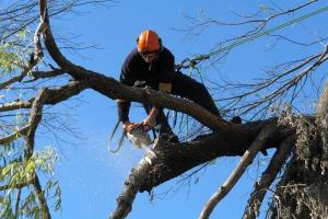 Почти полмиллиона в Каменске-Уральском потратят на валку старых и больных деревьев