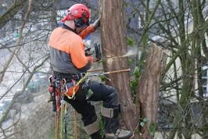 На кронирование и валку деревьев во дворах Каменска-Уральского потратили более пяти миллионов рублей