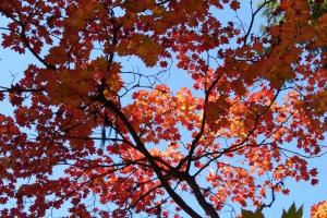 Относительно теплая октябрьская погода в Каменске-Уральском сохранится до конца недели. Снег обещают только в воскресенье вечером