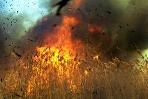 Сообщение о горящих торфяниках под Каменском-Уральским оказалось дезинформацией. А вот пшеница полыхала