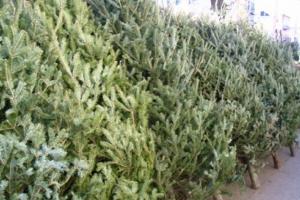 21 декабря в Каменске-Уральском начнут свою работу елочные базары