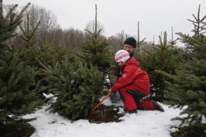С 16 декабря жители Каменска-Уральского смогут приобретать разрешения на рубку елок и сосенок для встречи нового года