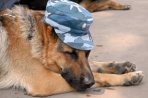 В Каменске-Уральского пёс по имени Хантер помог найти квартирных воров