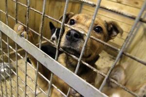 И в Каменском районе выделили деньги на отлов бродячих собак. Чуть более 620 тысяч рублей