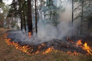 Особый противопожарный режим введен на территории Каменского района