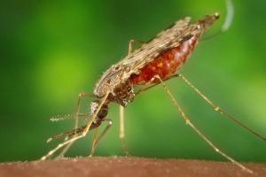 Водоемы в Каменске-Уральском полны личинок малярийных комаров