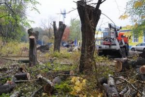 На омолаживание и вырубку деревьев в Красногорском районе Каменска-Уральского потратят миллион. На каких улицах будут работать