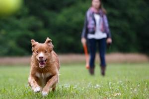 В Каменске-Уральском усилят контроль за хозяевами собак, которые выгуливают животных без намордников и поводков