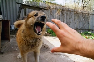 141 житель Каменска-Уральского в этом году был укушен различными животными