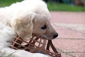 В Табаринском районе собаки до смерти искусали ребенка на детской площадке. В Каменске-Уральском решали, как не допустить такого у себя
