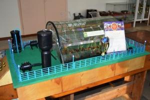 Агротехникум из Каменска-Уральского стал призером областной выставки благодаря «Круглогодичной теплице»