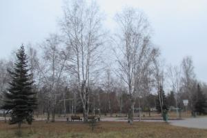 В Каменске-Уральском пытаются найти тех, кто высаживал березы, где нынче размещается Аллея славы