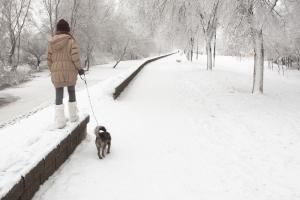 От сбора макулатуры до прогулок с собаками. Необычная благотворительная акция пройдет в субботу в Каменске-Уральском