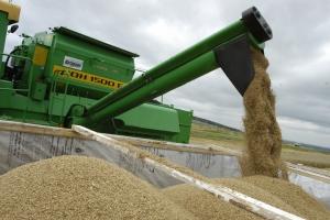 Под Каменском-Уральским стартовала уборка зерновых. Аграрии в шоке от урожайности