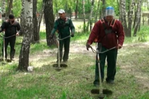В Каменске-Уральском нашли новых подрядчиков, которые будут следить за содержанием газонов, цветников и зеленых насаждений в микрорайоне Ленинский и старой части города