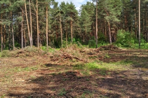 За шесть месяцев в Каменске-Уральском выявили двенадцать нарушений лесного законодательства