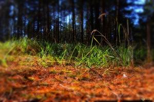 В лесах на границе Челябинской области и Каменского района отмечена высокая пожарная опасность