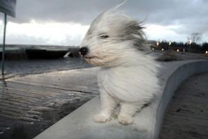 Коммунальщики Каменска-Уральского определили места, где в случае  сильного ветра наиболее опасно