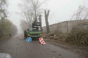 В Каменске-Уральском третью неделю проводят омолаживающую обрезку тополей и кленов