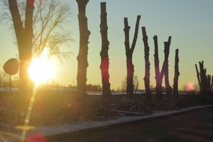 В Каменске-Уральском завершили омолаживающую обрезку крон деревьев