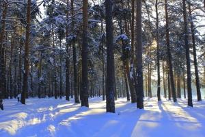 От несанкционированных парковок до заборов. В минувшем году в Каменске-Уральском выявлено семь нарушений лесного законодательства