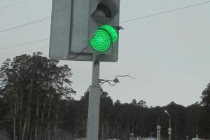 В Каменске-Уральском появились серийные вандалы, ломающие светофоры? Разбираться будет полиция