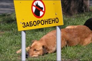 За шум, мусор и собак без намордников. Административных штрафов больше, чем на миллион, выписали в прошлом году в Каменске-Уральском