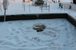 В Каменске-Уральском щенка сбросили с крыши многоэтажного дома