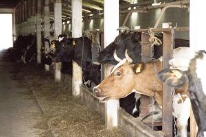 В Каменском районе планируется строительство еще одного завода по переработке молочной продукции