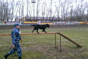 Кинолог из Каменска-Уральского остановился в шаге от тройки призеров в турнире по служебному собаководству