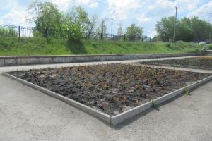 Жители Каменска-Уральского сотнями крадут кусты цветов, которые высаживают коммунальщики