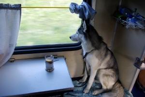 Жители Каменска-Уральского, как и всей России, смогут отправлять животных в самостоятельные поездки