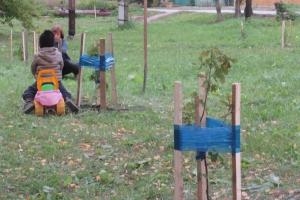 Жители поселка Северный Каменска-Уральского по собственной инициативе высадили несколько десятков деревьев в своем сквере