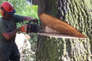Еще 600 тысяч рублей выделили в Каменске-Уральском на валку деревьев