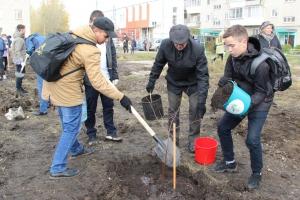 Живая зеленая изгородь выросла в одном из дворов поселка им. Чкалова в Каменске-Уральском