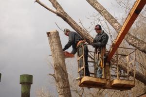 С начала года во дворах Каменска-Уральского кронировано деревьев почти на миллион рублей
