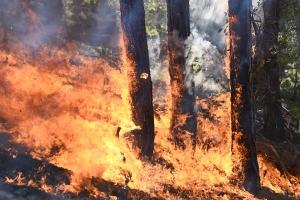 Каменский район оказался на втором месте в области по площади лесных пожаров