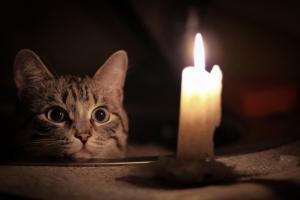 Два десятка домов в поселке Северный в Каменске-Уральском 14 декабря на несколько часов останутся без электричества