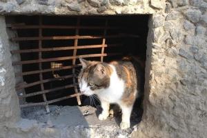Давать кошкам греться в подвалах или нет? Как в Каменске-Уральском будут решать необычный коммунальный спор