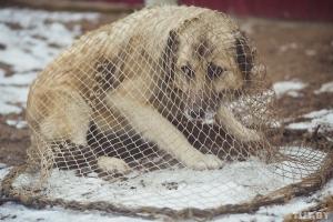 Более трех с половиной миллионов рублей потратят в Каменске-Уральском в 2019 году на отлов, стерилизацию, эвтаназию и уничтожение бродячих собак