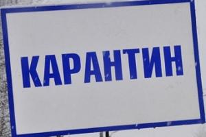 Карантин по бешенству на территории поселка Силикатный Каменска-Уральского отменен