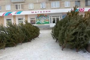 Елочные базары начнут работать в Каменске-Уральском с 21 декабря